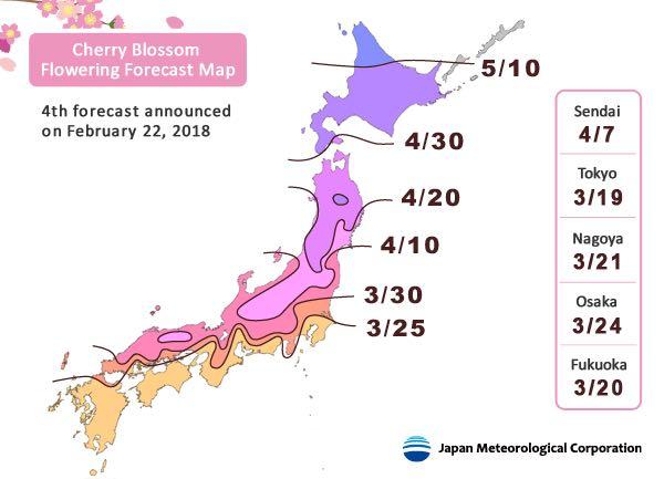 Bingung Cari Sakura, Yuk Lihat Peta Khusus Sakura