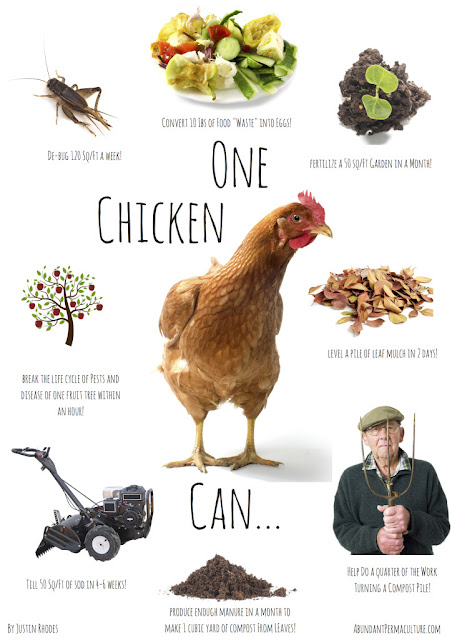 The power of one chicken.