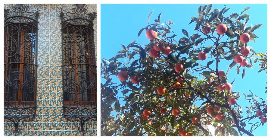mosaïque et orangers à Barcelone