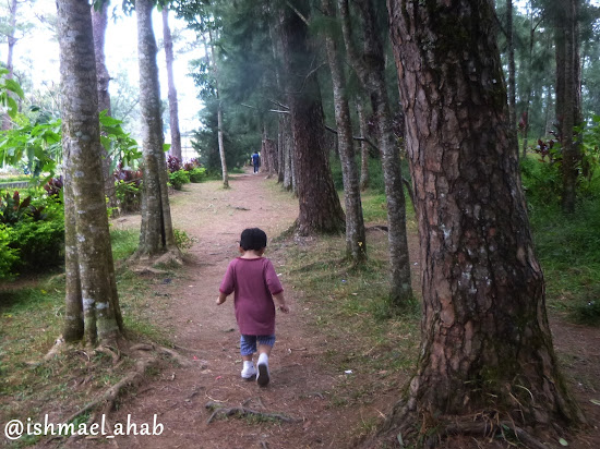 Little Ahab running under the pines in Wright Park of Baguio City