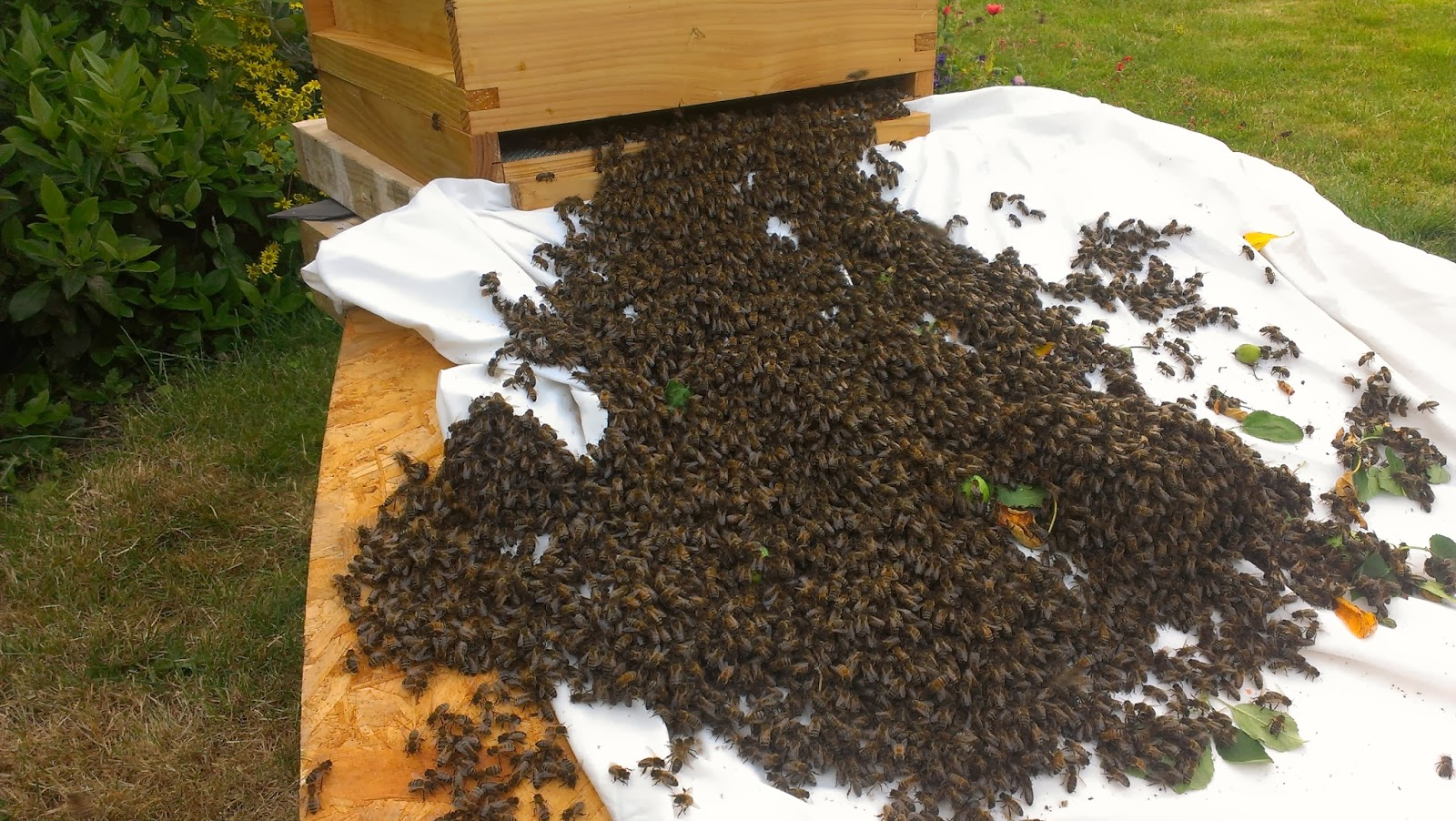What to do with a swarm of bees.