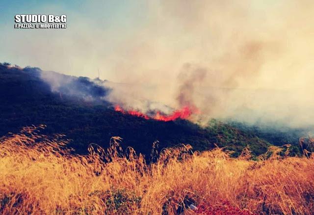 Αργολίδα: Πυρκαγιά στο Αρκαδικό Επιδαύρου