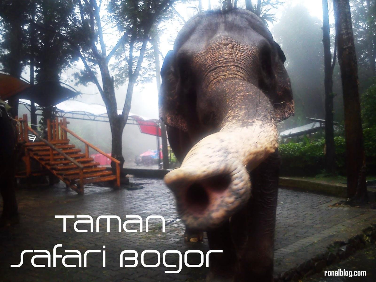 Weekend Di Taman Safari Bogor