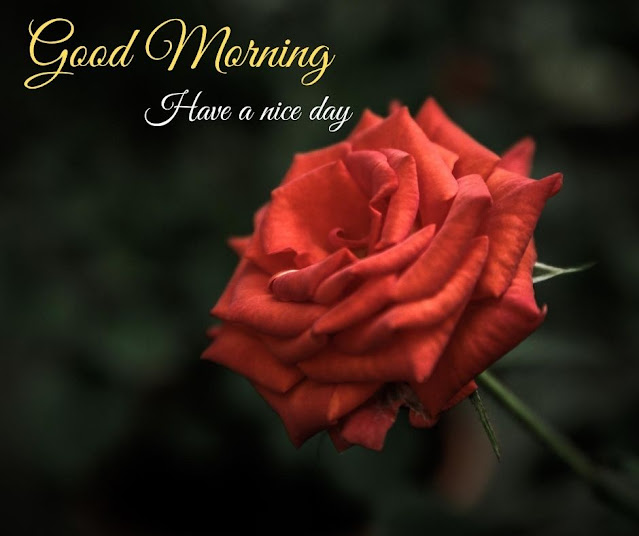 Awesome flower photo with good morning