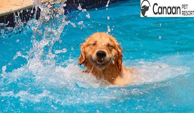 https://www.canaanpetresort.com/swimming.html