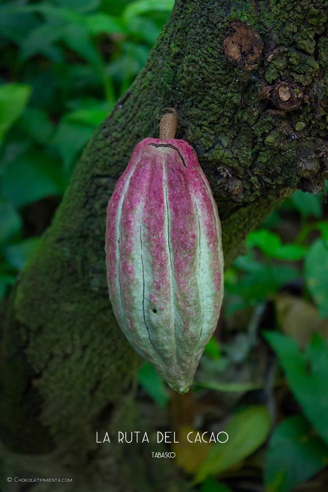 Descubriendo la Ruta del Cacao en Tabasco