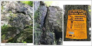 Shealyn's Way, Centerfold, rock climbing, sport climbing, Rumney Rocks, NH