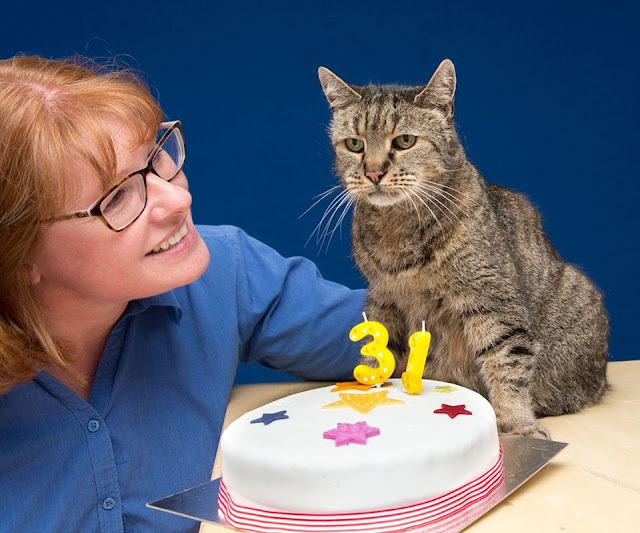 31-year-old Cat, Who Chose His Humans 26 Years Ago, is Still Going Strong