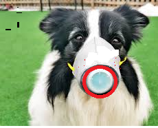 Coronavirus in Dogs, what is coronavirus in dogs, coronavirus symptoms in dogs, corona for dogs, coronavirus canine corona virus in dogs corona disease in dogs can humans get coronavirus from dogs corona for dogs