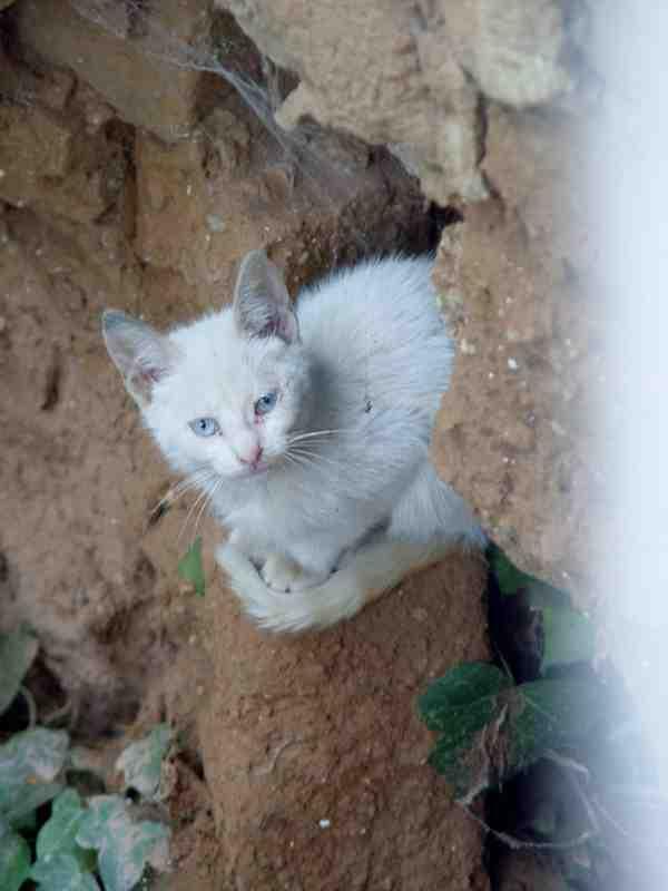 Mascotas y muchas m s cosas otro intruso en mi jard n for Ahuyentar gatos de mi jardin