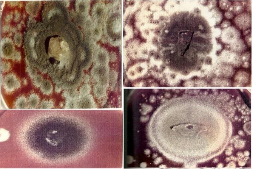 Εφαρμογές της Βιοεκχύλισης (Bioleaching) και Βιορόφησης (Biosorption, bioaccumulation) μετάλλων στην Μεταλλουργία και Περιβαλλοντική Βιοτεχνολογία