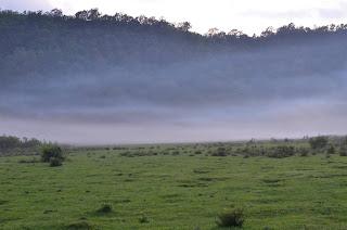 savanna dandaun hill