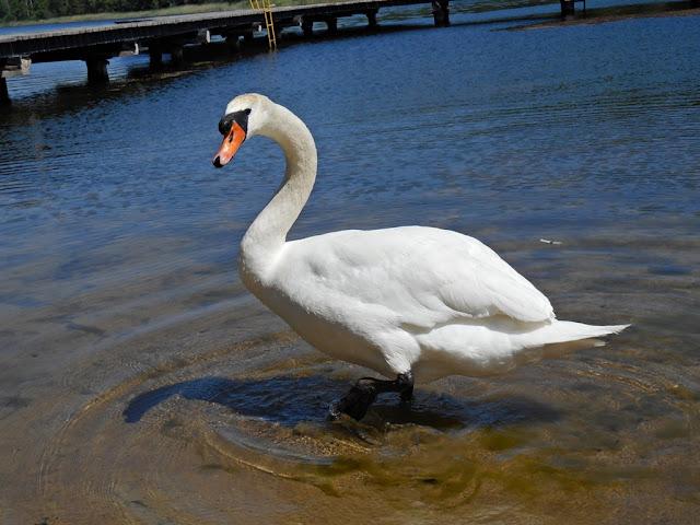 biały ptak, woda, Linie, plaża