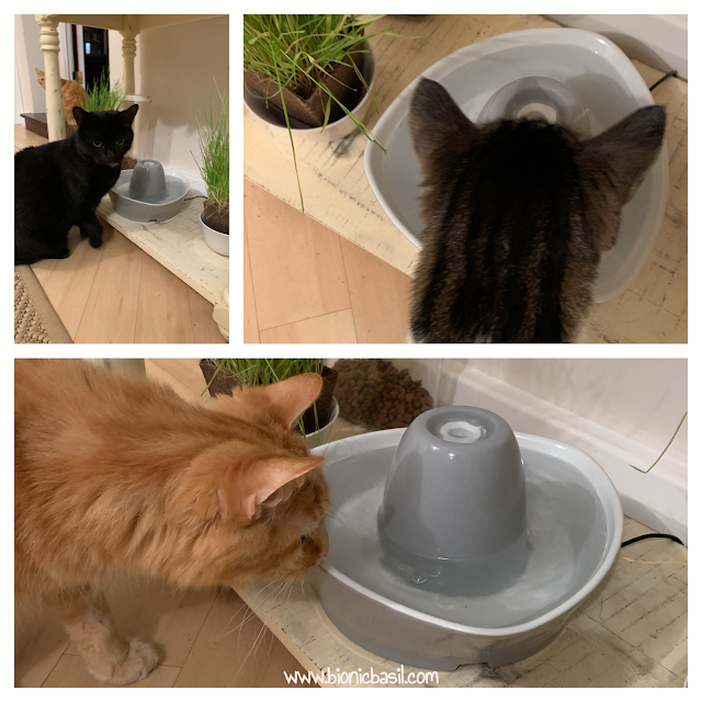What's In The Box ©BionicBasil® The PetSafe Streamside Ceramic Pet Fountain - Fudge Parsley Melvyn