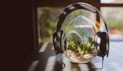 Η μουσική και η ανάπτυξη των φυτών
