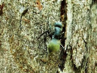 Formiga em Casca de Tronco de Árvore no Parque Saint Hilaire, Viamão