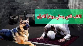 الكلب الذي يصلي ويقرأ القرآن