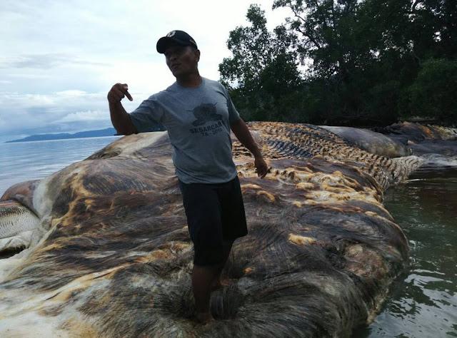 http://www.rakyatsejagad.com/2017/05/maluku-geger-monster-laut-35-ton-muncul.html