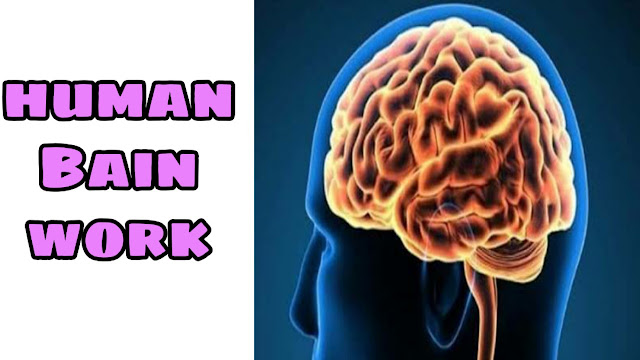 How the brain works | how to work human brain