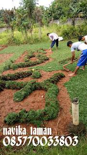 Tukang Pasang Rumput Gajah Mini - Jual Rumput Gajah Mini - Tukang Taman