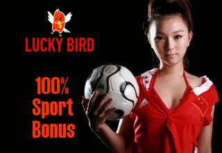 Lucky Bird Screen