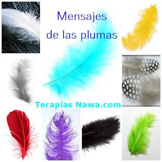 Que nos dicen las plumas que encontramos?