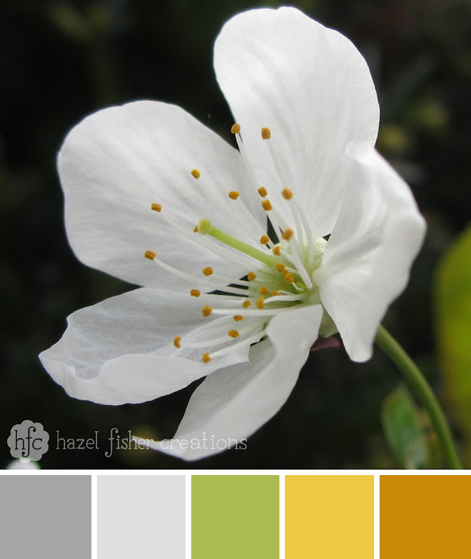 Colour Palette Inspiration Cherry Blossom flower by hazel fisher creations