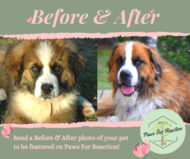 Send a 'Before & After' photo of your pet to be featured on Paws For Reaction