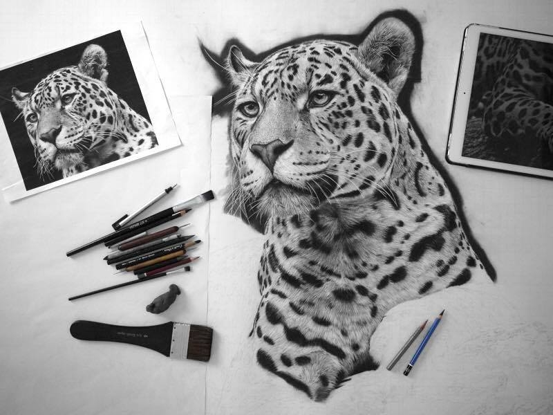 13-Majestic-Beauty-jaguar-wip-Monica-Lee-zephyrxavier-Eclectic-Mixture-of-Pencil-Wild-Life-and-Portrait-Drawings-www-designstack-co