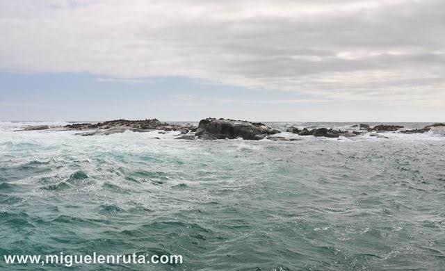 Leones-marinos-Isla-Duiker