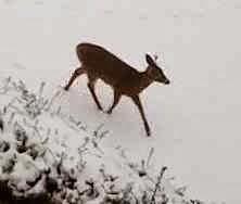 elk usa, moose, meat, deer, game, dinner, warwick, ri, alaska