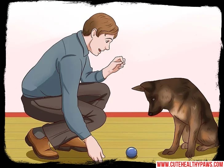 stop the dog's annoying barking