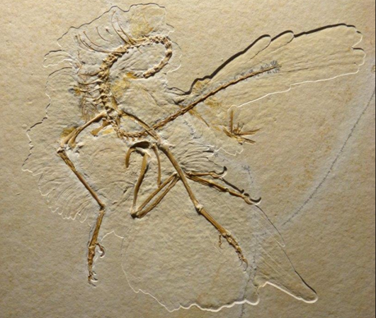 Descoberta nova espécie da ave mais antiga da Terra