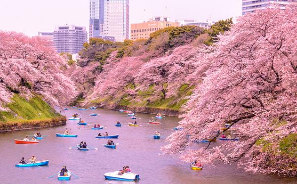 6 Tempat Wisata di Jepang yang Menarik untuk Dikunjungi