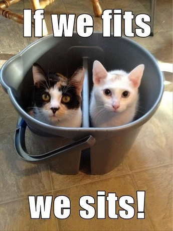 """2 funny cat in a bucket • """"If we fits we sits!"""""""