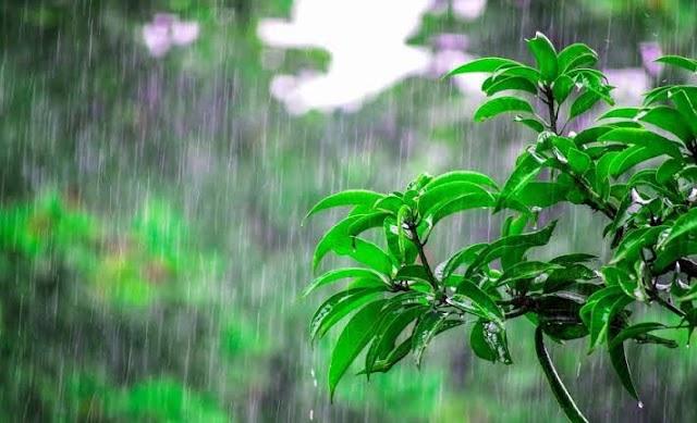 छत्तीसगढ़ में अब तक 792.8 मि.मी. औसत वर्षा दर्ज