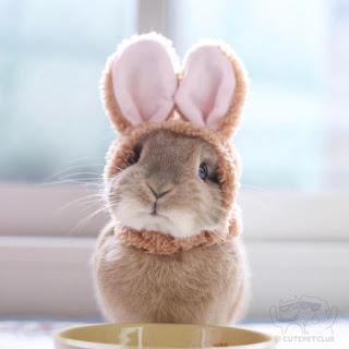 telinga kelinci bergerak