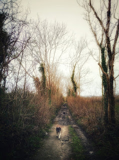 dog walking on a country lane, foggy winter landscape