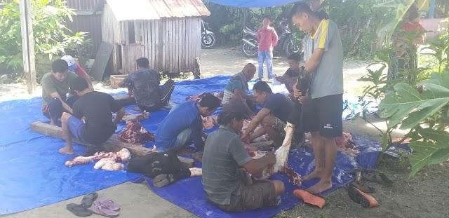 IWO Pesisir Barat, Salurkan Bantuan Hewan Qurban Dari Gubernur Lampung