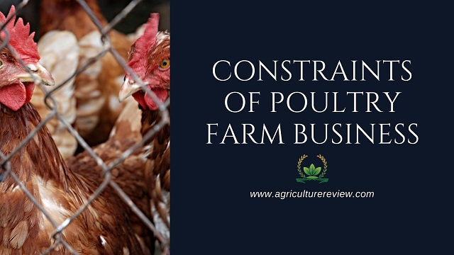 constraints of poultry farm business