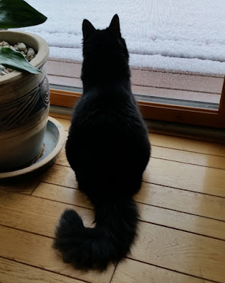 Boo during snow storm