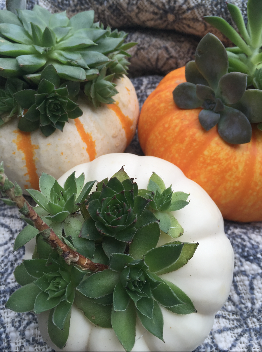 Succulents in pumpkins centerpiece