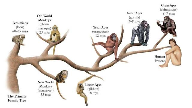 متى انفصل الانسان عن القرد