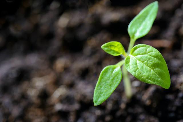En favor de la memoria y la innovación gastronómica desde la sustentabilidad