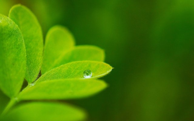 Windows 8 Green Leaf Water Drop Wallpapers
