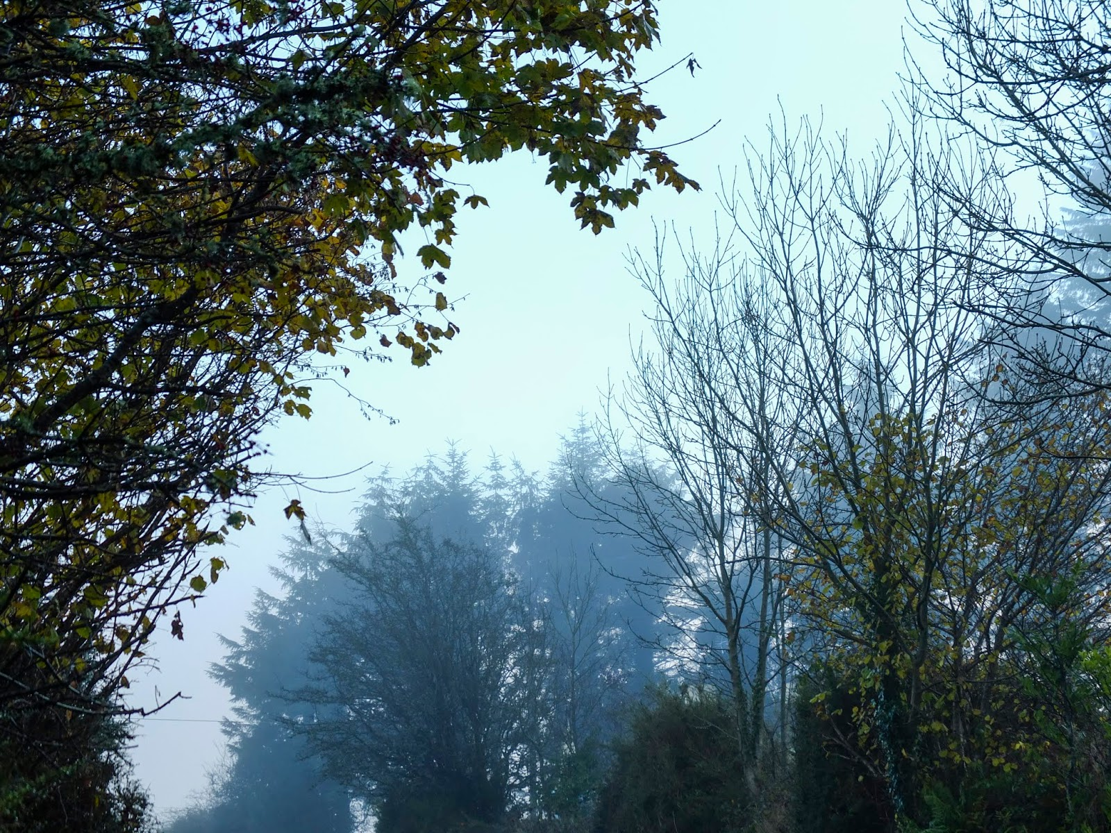 Trees on either side of a country road covered in morning mist.