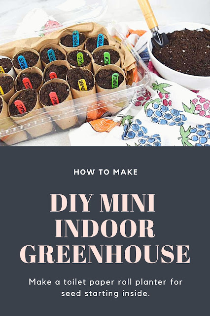 How to make a diy greenhouse small for seed starting indoors diy. Use greenhouse gardening to start seeds inside and transplant them to your garden outdoors later.  Or you can also use the starts for container gardening. Make a toilet paper roll planter for tomoato, cucumber, pepper, and more. Get tips and hacks for for an indoor greenhouse diy to make garden starts for a mini greenhouse diy.  This is easy with upcycled materials and kids can make it too!  #gardening #greenhouse #diy