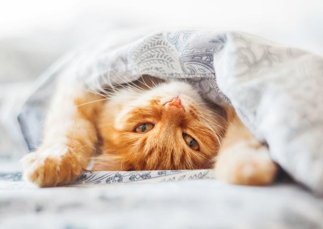 Drama Pelihara Kucing di Kosan