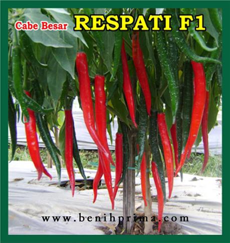 Benih Prima, benih unggul, benih cabe besar, benih cabe unggul, benih cabe prima, benih cabe respati f1,