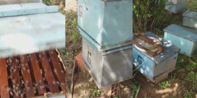 Apicultor tem colmeias envenenadas e perde toda produção de mel em Monsenhor Hipólito